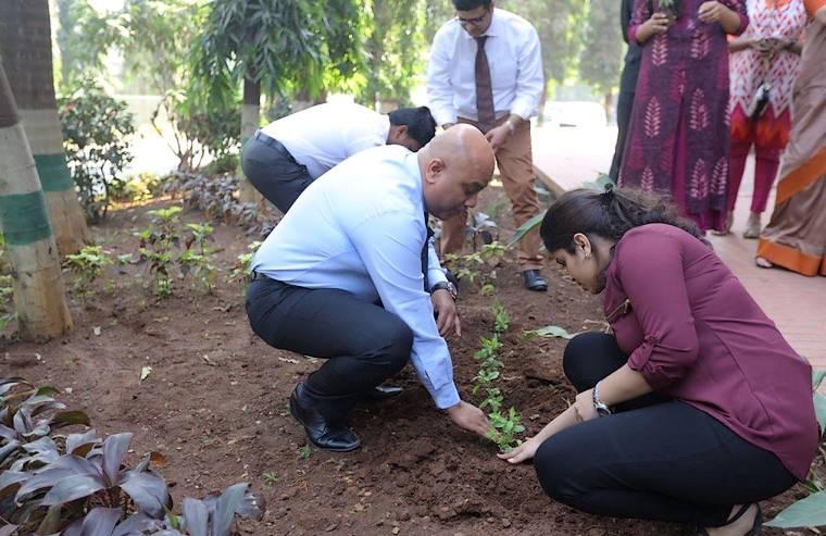 Surgeons planting saplings